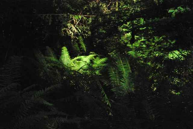 Ferns in Light at Deluthy Bike Park